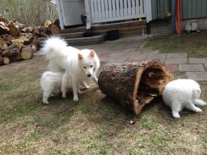 Ontto puu oli jännittävä!